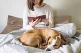 A dog lying on a bed while a woman reads a book.