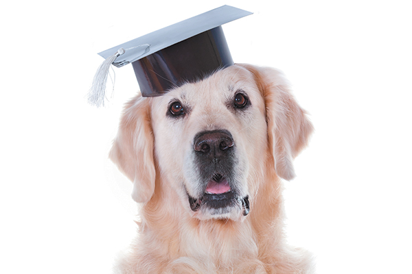 A dog with a graduation cap on.