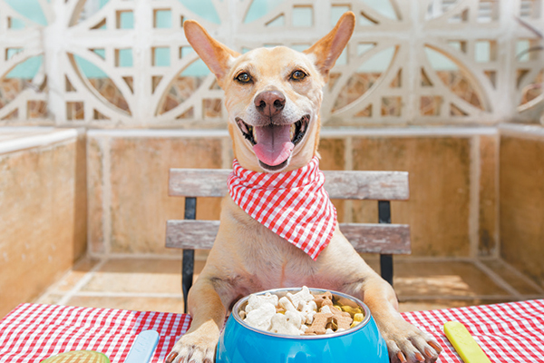 A happy dog with a bowl of food.