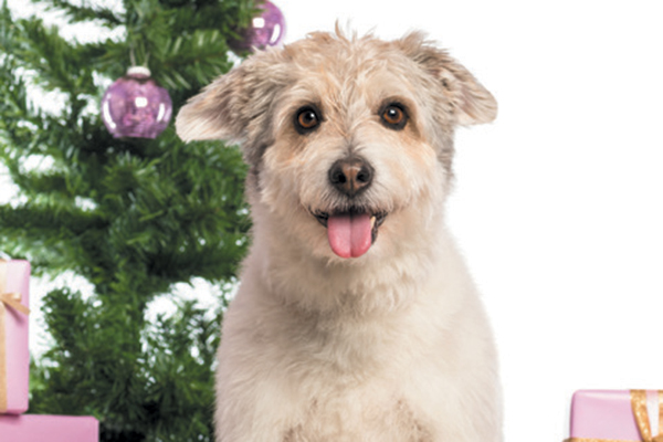 A mixed breed dog with presents and a Christmas tree.