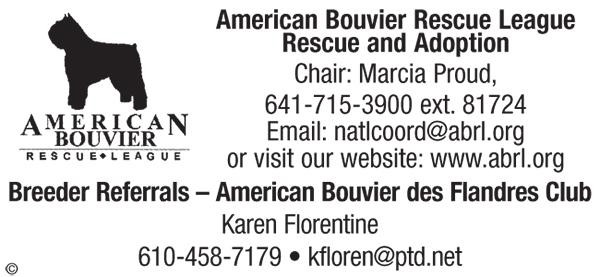 American Bouvier Rescue.