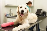 An injured dog with a cast on at the vet.