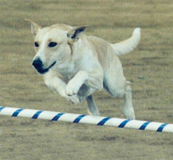 BANBURY CROSS FARM CAROLINA DOGS — UKC/ARBA.