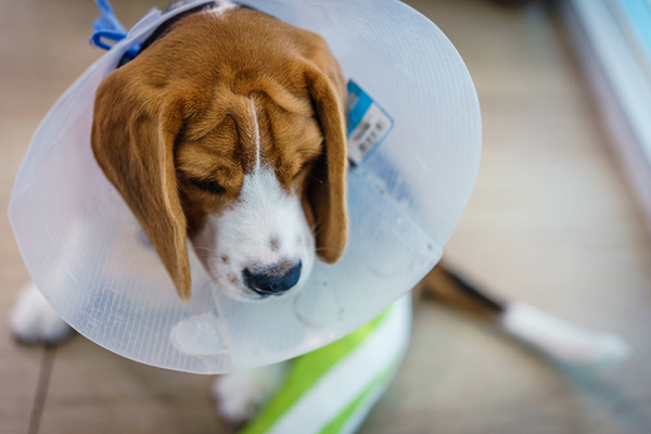 All About Alternative Dog Cancer Treatments