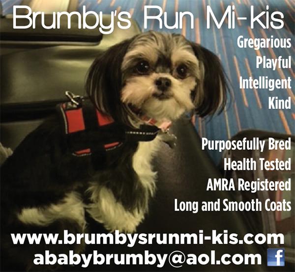 Brumby's Run Mi-Kis.