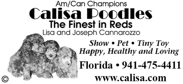 Calisa Poodles.