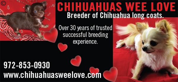 Chihuahuas Wee Love.