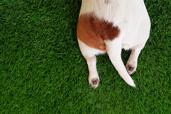 Closeup of a dog tail.