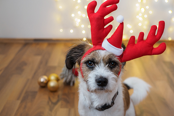 Holiday Safety for Dogs: 9 Tips