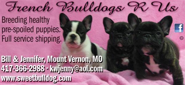 Purebred and Hybrid Dog Breeds