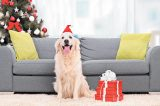 A happy dog with a Christmas tree and presents. Photography © Ljupco | Thinkstock.
