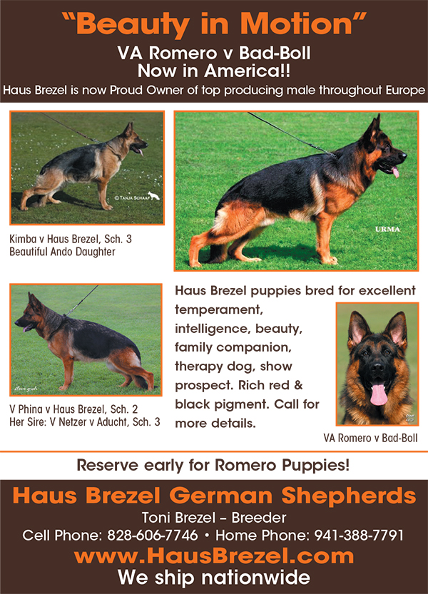 Purebred and Hybrid Dog Breeds