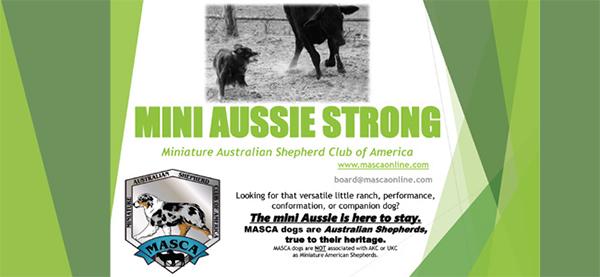 Miniature Australian Shepherd Club of America.