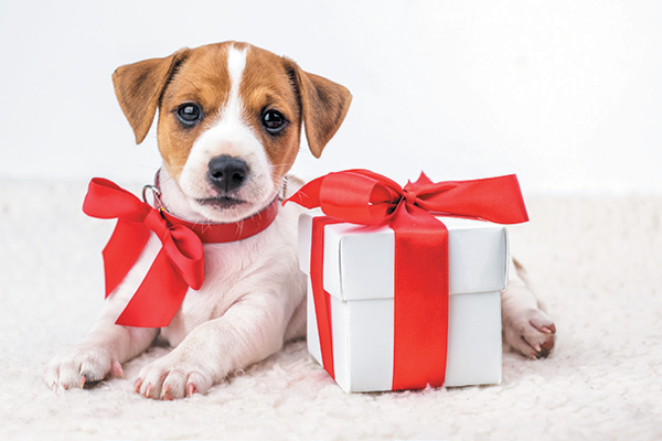 Holidays and Canines: Hold Your Pup Joyful at Each Age