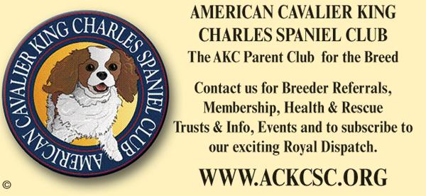 American Cavalier King Charles Spaniel Club.