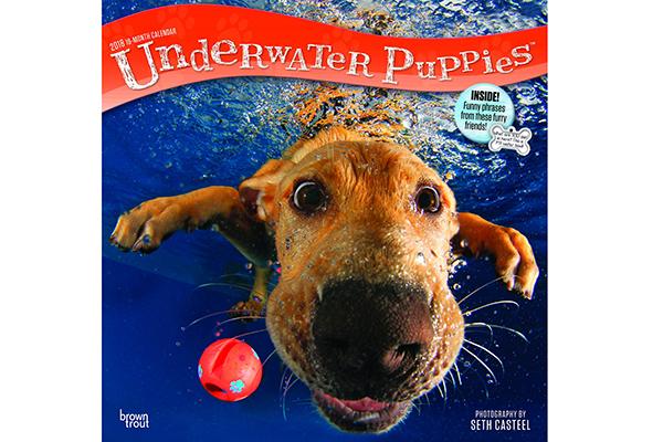 Underwater Puppies.