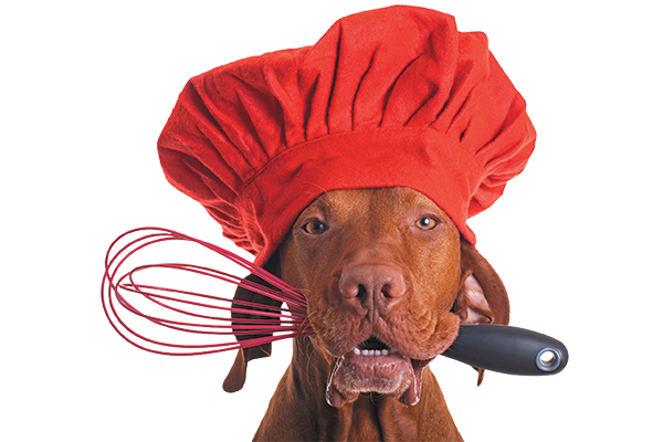 Dog with a chef hat on and cooking tools in hand.