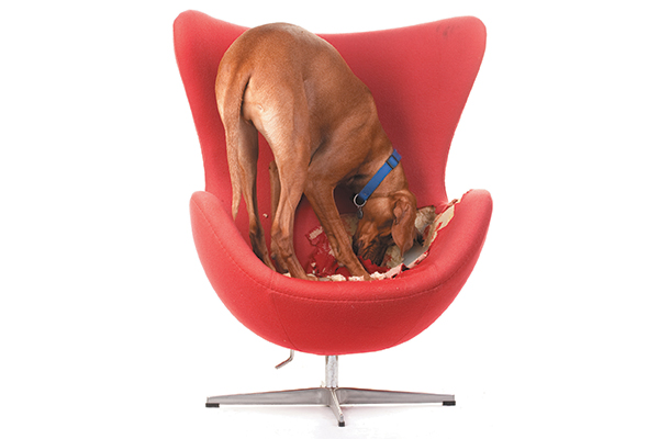 Superb Why Do Dogs Scratch Their Beds Creativecarmelina Interior Chair Design Creativecarmelinacom