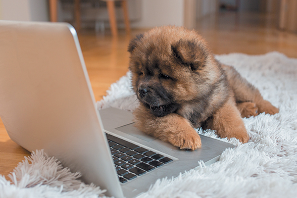 A dog on a laptop computer.