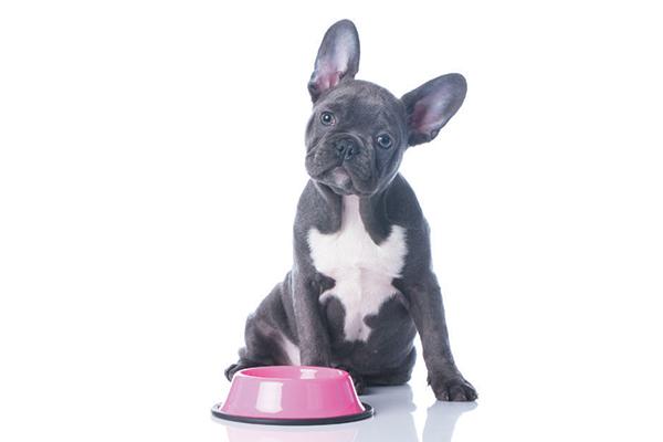 Deciphering Dog Stomach Noises