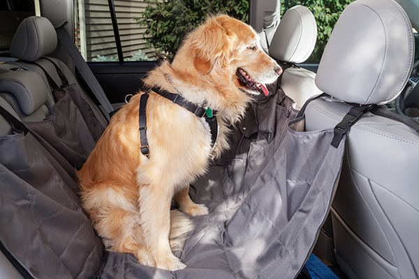 A happy dog traveling in a car in a harness.