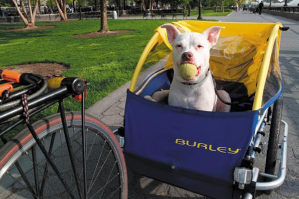 Battery Park Metropolis is NYC's Most Canine-Pleasant Neighborhood