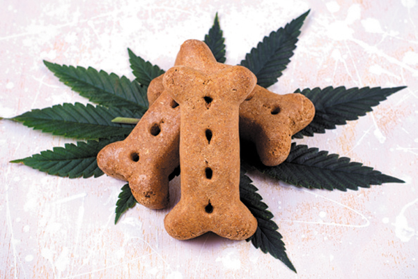 Cannabidiol dog treats.