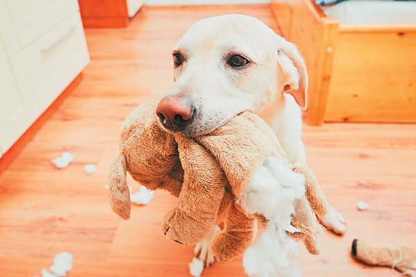 What To Do To Stop Dog Chewing