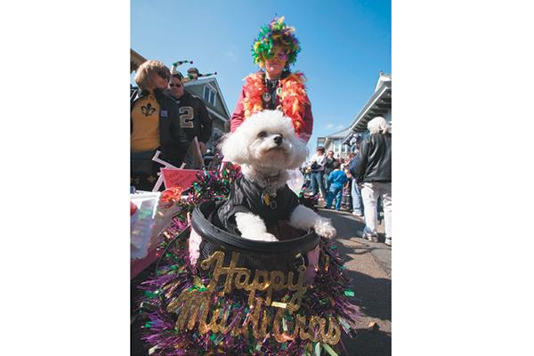 I love a Barkus Parade.