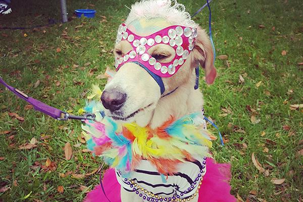 Deland Mardi Gras dog parade.
