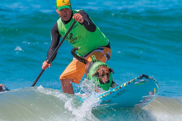 Surf City Surf Dog.