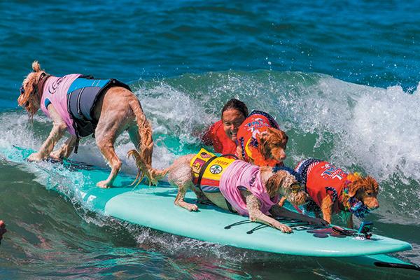 The Surf City Surf Dog Festival.