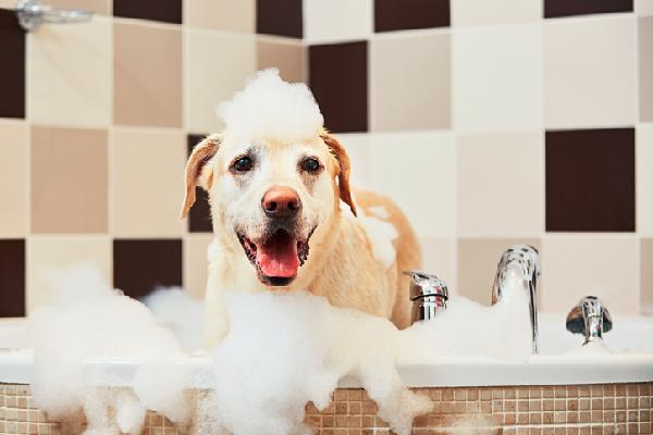 Foamed dog in tub when bathing