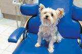 A dog sitting in a dentist chair.