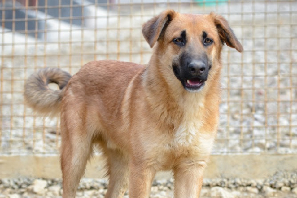 You can apply to adopt Sochi Dogs like Billy.