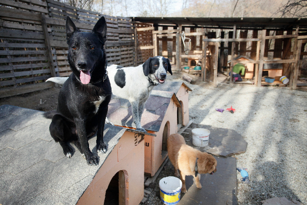 Djonik and Sonya at the Sochi Dogs shelter.