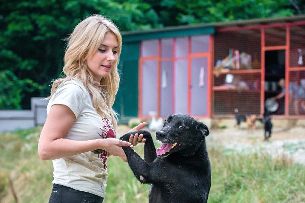 Djonik at the Sochi Dogs shelter.