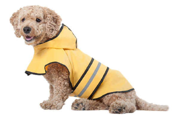 Dog raincoat.