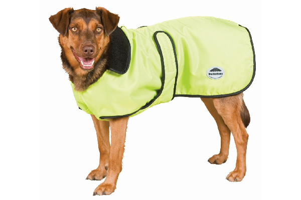 Dog windbreaker.