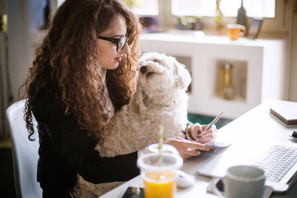 Dog at work with girl on a laptop.