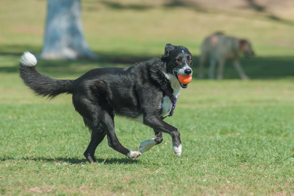 8 Ways Your Dog Can Help You Quit Smoking