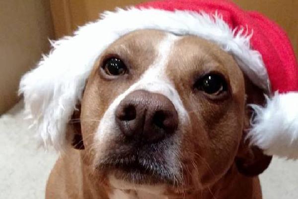 Polly at Christmas.