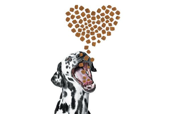 A dog loving on treats and food.