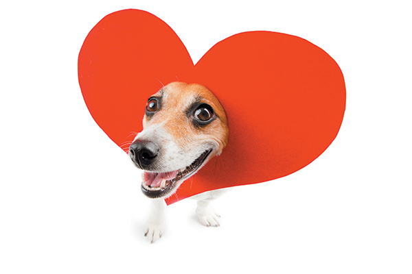 A dog wearing a heart... on his head.