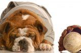 A dog next to a baseball and baseball glove.