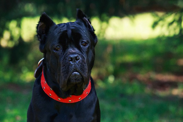 The 5 Best Guard Dog Breeds