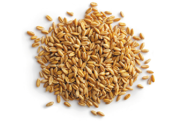 Closeup photo of grains.
