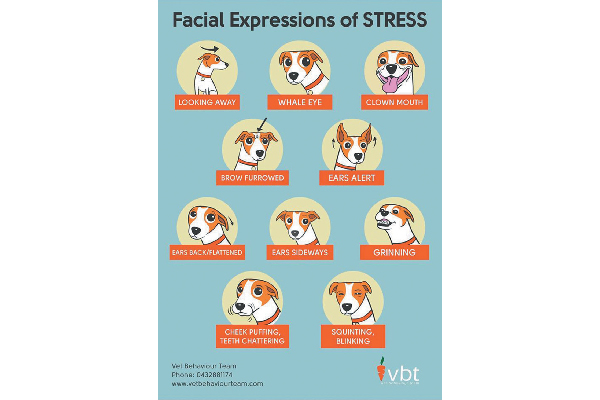 Dog stress facial expressions.