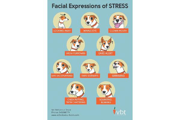 Dog stress facial expressions.