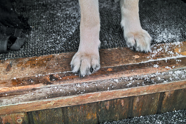 14 Ways To Deal With Muddy And Dirty Paws